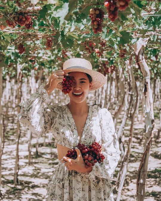 Khám phá vườn nho xanh mát, trĩu quả ở Ninh Thuận - Ảnh 7.