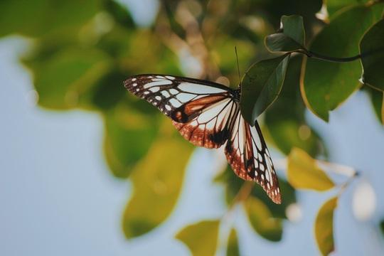 Những khoảnh khắc bình yên đúng nghĩa ở Đà Nẵng, Hội An - Ảnh 21.