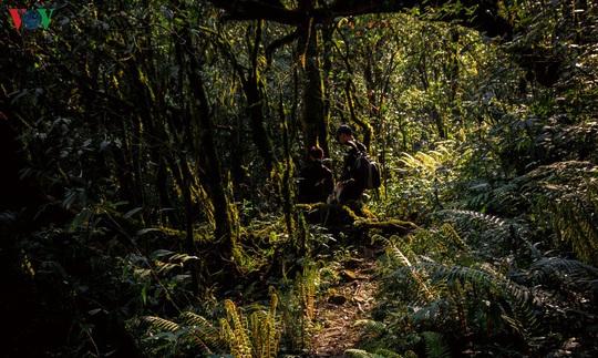 Chinh phục đỉnh Putaleng, đắm say vẻ đẹp của khu rừng cổ tích - Ảnh 1.