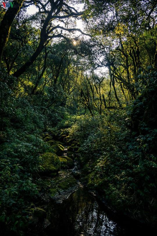 Chinh phục đỉnh Putaleng, đắm say vẻ đẹp của khu rừng cổ tích - Ảnh 2.