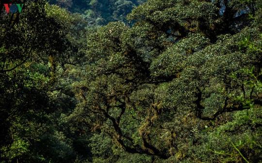 Chinh phục đỉnh Putaleng, đắm say vẻ đẹp của khu rừng cổ tích - Ảnh 11.