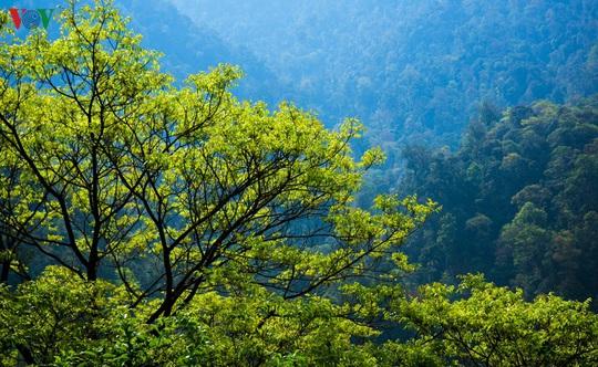 Chinh phục đỉnh Putaleng, đắm say vẻ đẹp của khu rừng cổ tích - Ảnh 12.