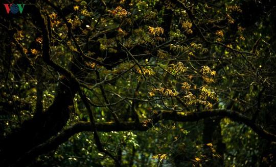 Chinh phục đỉnh Putaleng, đắm say vẻ đẹp của khu rừng cổ tích - Ảnh 13.