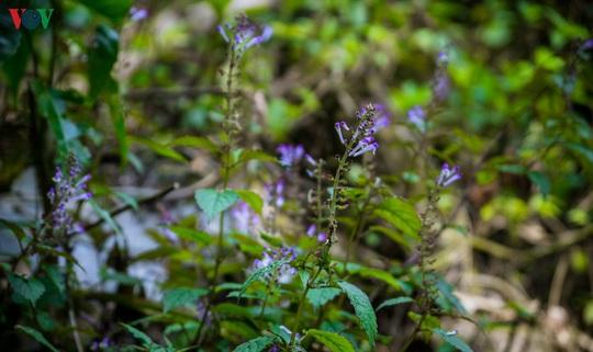 Chinh phục đỉnh Putaleng, đắm say vẻ đẹp của khu rừng cổ tích - Ảnh 14.