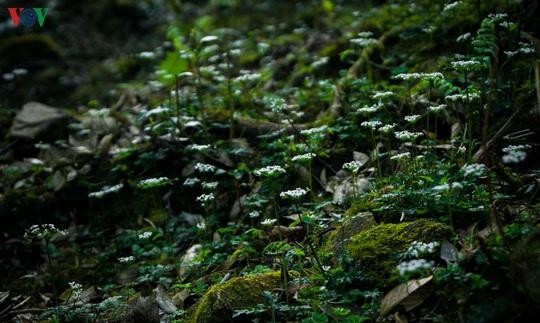 Chinh phục đỉnh Putaleng, đắm say vẻ đẹp của khu rừng cổ tích - Ảnh 15.