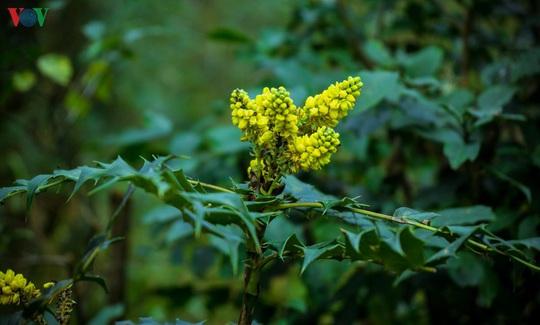 Chinh phục đỉnh Putaleng, đắm say vẻ đẹp của khu rừng cổ tích - Ảnh 17.