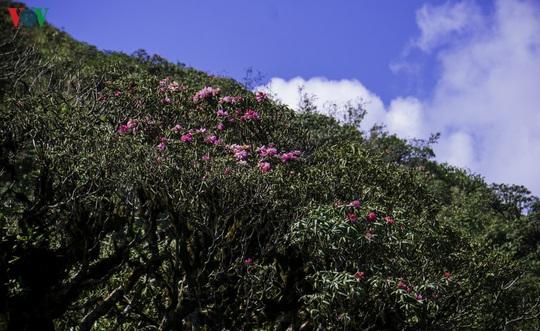 Chinh phục đỉnh Putaleng, đắm say vẻ đẹp của khu rừng cổ tích - Ảnh 18.