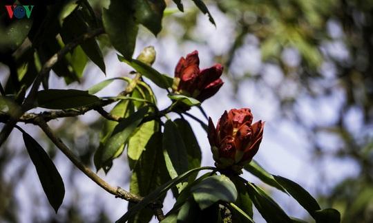 Chinh phục đỉnh Putaleng, đắm say vẻ đẹp của khu rừng cổ tích - Ảnh 20.