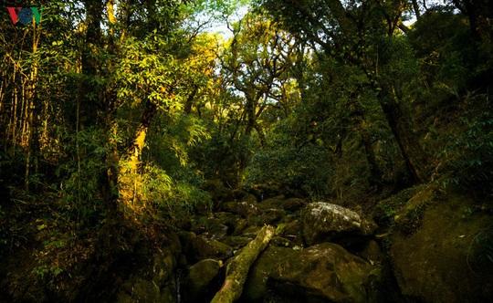 Chinh phục đỉnh Putaleng, đắm say vẻ đẹp của khu rừng cổ tích - Ảnh 3.