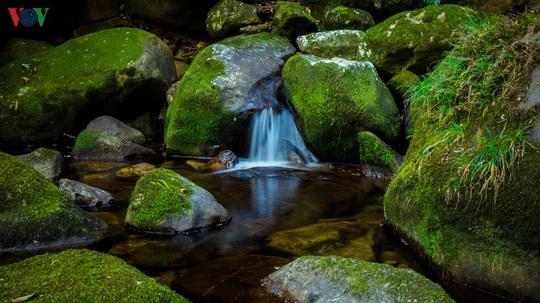 Chinh phục đỉnh Putaleng, đắm say vẻ đẹp của khu rừng cổ tích - Ảnh 5.