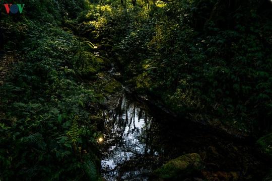 Chinh phục đỉnh Putaleng, đắm say vẻ đẹp của khu rừng cổ tích - Ảnh 6.