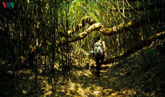 Chinh phục đỉnh Putaleng, đắm say vẻ đẹp của khu rừng cổ tích - Ảnh 7.