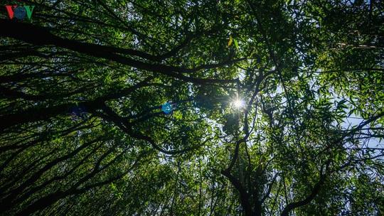 Chinh phục đỉnh Putaleng, đắm say vẻ đẹp của khu rừng cổ tích - Ảnh 8.