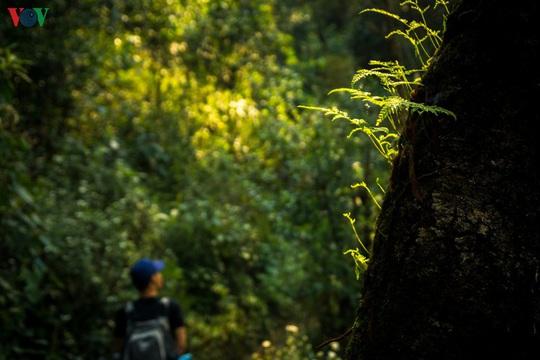 Chinh phục đỉnh Putaleng, đắm say vẻ đẹp của khu rừng cổ tích - Ảnh 9.