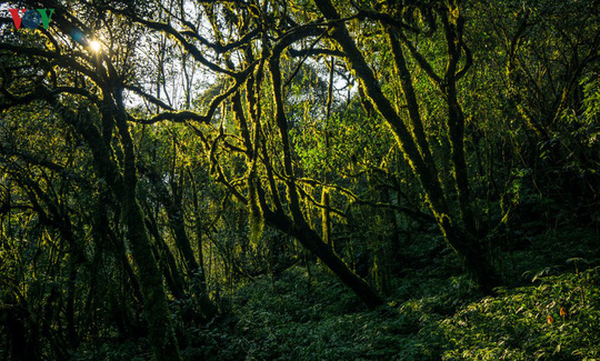 Chinh phục đỉnh Putaleng, đắm say vẻ đẹp của khu rừng cổ tích - Ảnh 10.