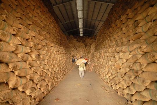 Doanh nghiệp xuất khẩu gạo vẫn ấm ức - Ảnh 1.