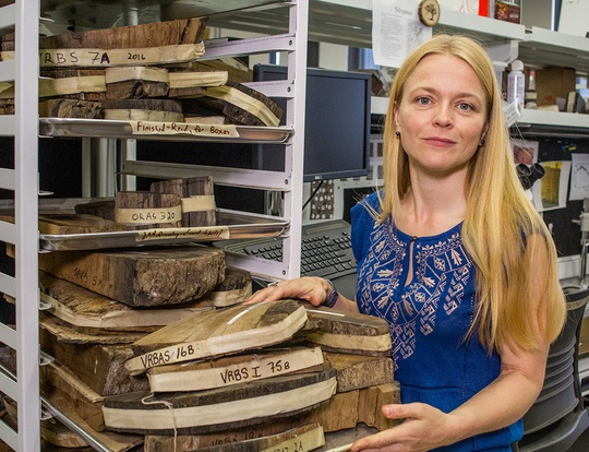 Bóng ma trong cây thông cổ tiết lộ bí ẩn đế chế 3.600 tuổi - Ảnh 1.