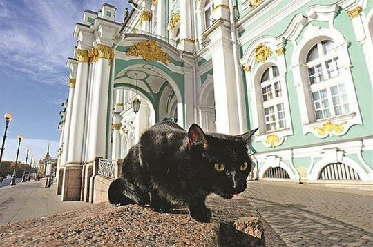 """Kỳ lạ bảo tàng thuê """"bảo vệ mèo"""" để trông giữ báu vật - Ảnh 1."""