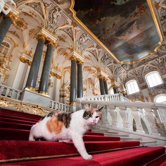 """Kỳ lạ bảo tàng thuê """"bảo vệ mèo"""" để trông giữ báu vật - Ảnh 2."""