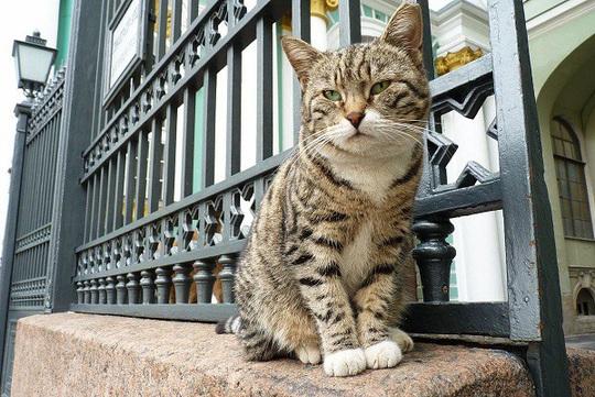"""Kỳ lạ bảo tàng thuê """"bảo vệ mèo"""" để trông giữ báu vật - Ảnh 4."""