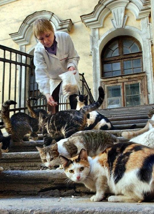 """Kỳ lạ bảo tàng thuê """"bảo vệ mèo"""" để trông giữ báu vật - Ảnh 10."""