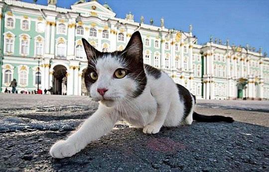 """Kỳ lạ bảo tàng thuê """"bảo vệ mèo"""" để trông giữ báu vật - Ảnh 6."""