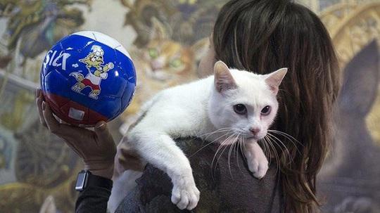 """Kỳ lạ bảo tàng thuê """"bảo vệ mèo"""" để trông giữ báu vật - Ảnh 9."""
