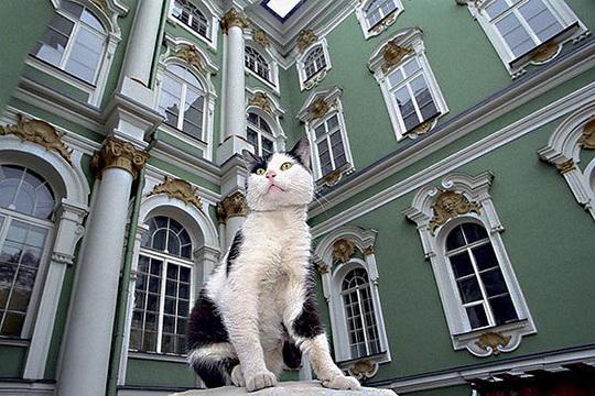 """Kỳ lạ bảo tàng thuê """"bảo vệ mèo"""" để trông giữ báu vật - Ảnh 13."""