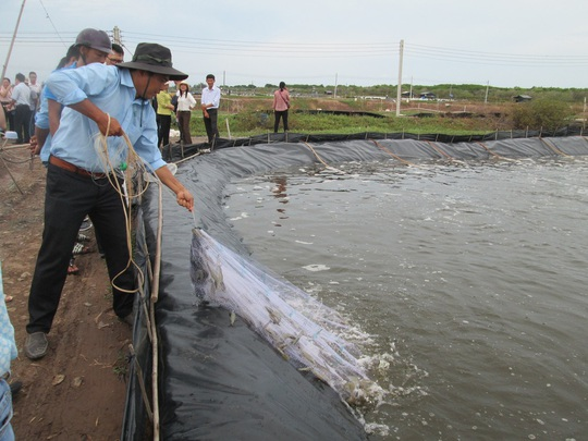 Doanh nghiệp xuất khẩu thủy sản than khổ vì chính sách hỗ trợ không đồng đều - Ảnh 1.