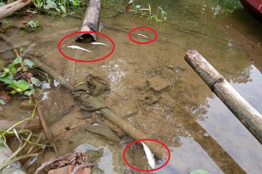 Vụ cá tự nhiên chết bất thường: Cơ sở sản xuất giấy vàng mã xả thải trực tiếp ra sông - Ảnh 2.