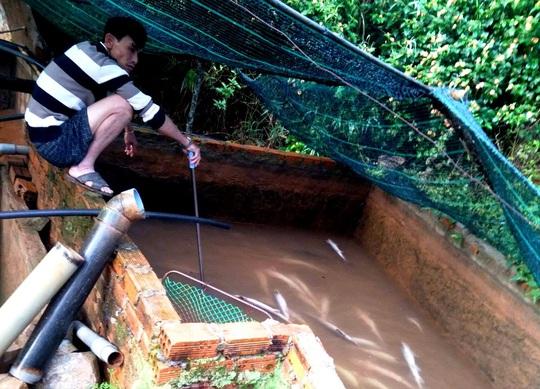 Hơn 5 tấn cá tầm thịt và 4 ngàn cá giống chết nghi bị đổ thuốc sâu đầu độc - Ảnh 7.