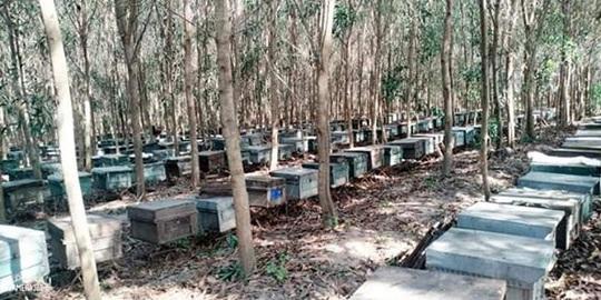 Ong nuôi hàng trăm tổ chết bất thường, nghi bị đầu độc - Ảnh 2.