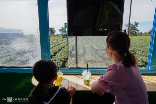 Du khách thích thú với những quán cà phê di động dưới hàng thông trăm tuổi - Ảnh 8.