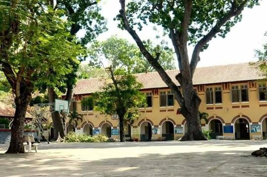 Trường học rất cần cây xanh - Ảnh 1.