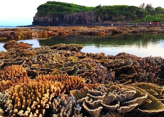 Ngắm tuyệt tác san hô cực đẹp ở Gành Yến – Quảng Ngãi - Ảnh 2.