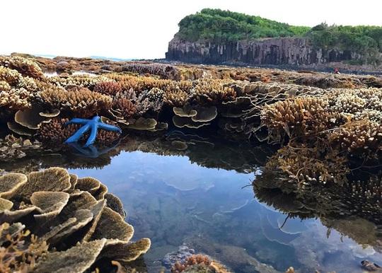 Ngắm tuyệt tác san hô cực đẹp ở Gành Yến – Quảng Ngãi - Ảnh 12.