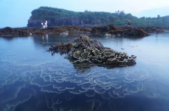 Ngắm tuyệt tác san hô cực đẹp ở Gành Yến – Quảng Ngãi - Ảnh 11.