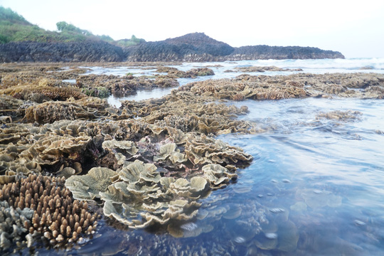Ngắm tuyệt tác san hô cực đẹp ở Gành Yến – Quảng Ngãi - Ảnh 9.