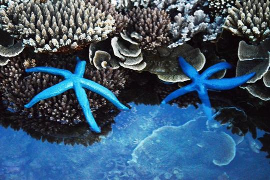 Ngắm tuyệt tác san hô cực đẹp ở Gành Yến – Quảng Ngãi - Ảnh 7.