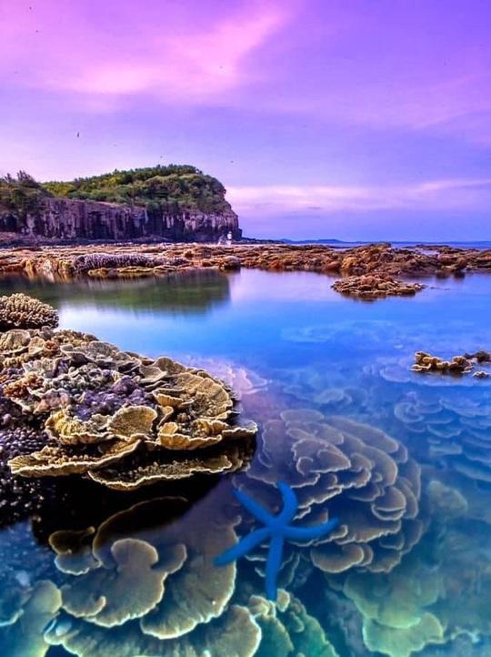 Ngắm tuyệt tác san hô cực đẹp ở Gành Yến – Quảng Ngãi - Ảnh 6.