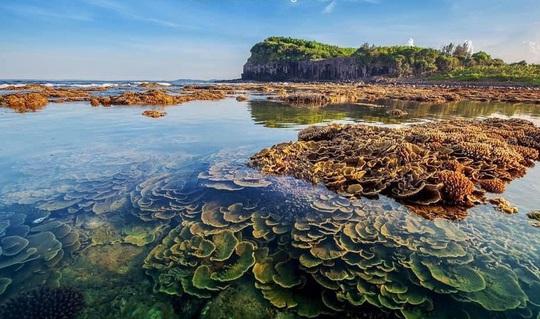 Ngắm tuyệt tác san hô cực đẹp ở Gành Yến – Quảng Ngãi - Ảnh 5.