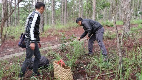 Kỳ thú săn nấm rừng thông Đà Lạt - Ảnh 2.