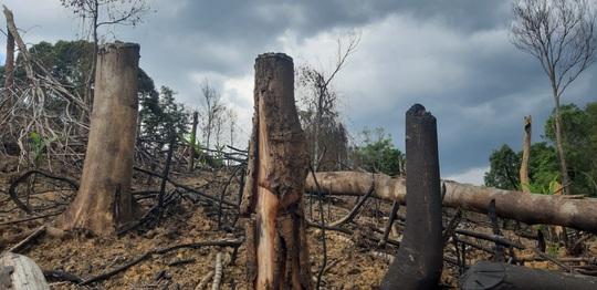 Khởi tố vụ phá rừng đầu nguồn thủy điện - Ảnh 2.