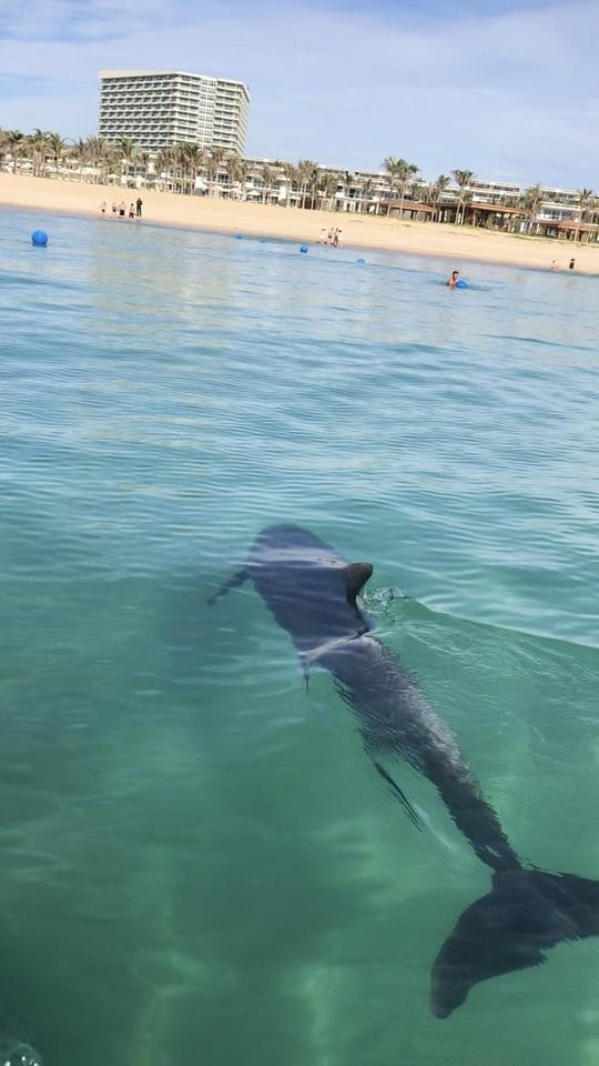 Cá heo ghé thăm biển Cam Ranh - điềm lành sau đại dịch - Ảnh 1.