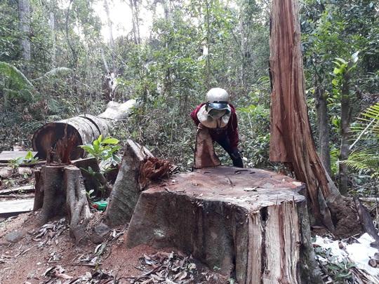 Để mất 103m3 gỗ, dàn lãnh đạo địa phương tự nhận kiểm điểm - Ảnh 1.