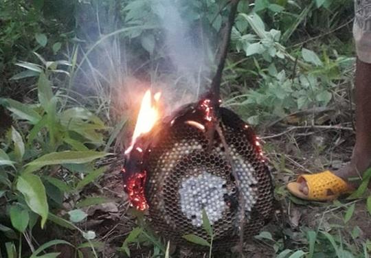 Ra vườn chơi, 2 anh em bị ong đốt thương vong - Ảnh 1.