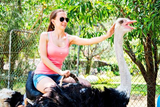 Từ ngày 1-6, Khu du lịch Đảo Khỉ và Đảo Hoa Lan đón khách trở lại - Ảnh 7.