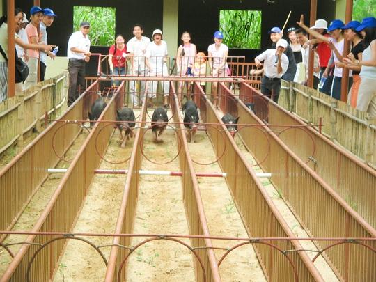 Công viên Du lịch Yang Bay đã mở cửa đón khách trở lại - Ảnh 6.
