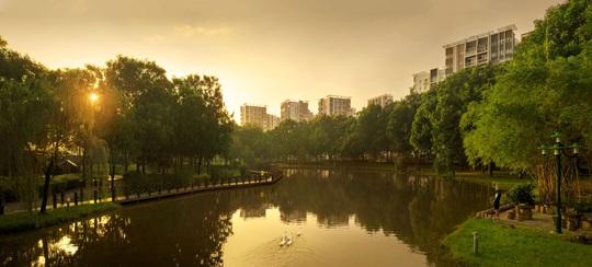 Cuộc thi nhiếp ảnh độc đáo về lá phổi xanh phía Tây Sài Gòn - Ảnh 1.
