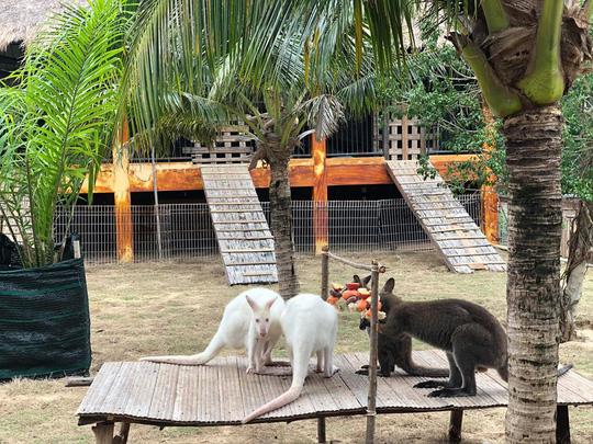 Ghé FLC Zoo Safari xem hổ săn mồi, chơi cùng voi và chuột túi Wallaby - Ảnh 3.